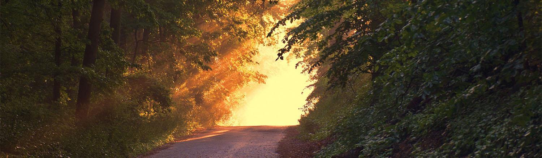 mindfulness-path