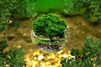 ecology-blog