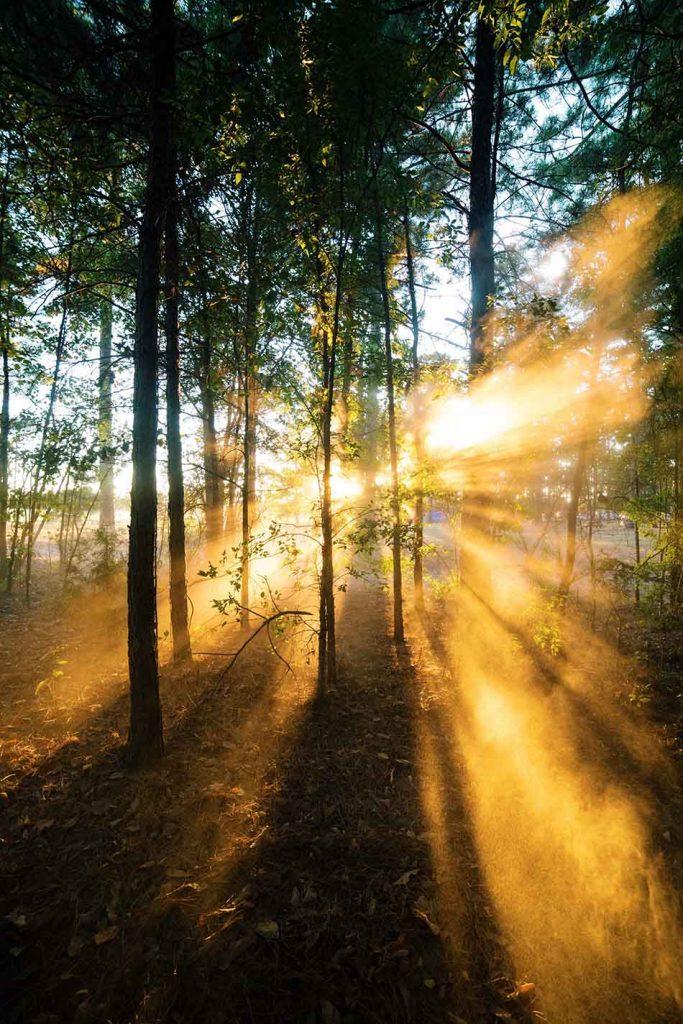 Sunlight For Health
