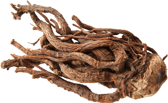 Tang-Kuei Ancient Chinese Herbal Cure