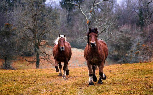 Wild Horses in Danger From Trump Budget
