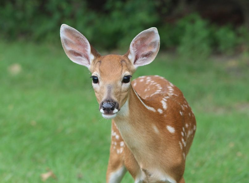 Animal Rights Are Human Rights Deer