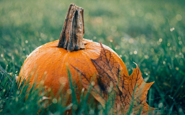 8 Great Benefits of Pumpkin Seed Oil