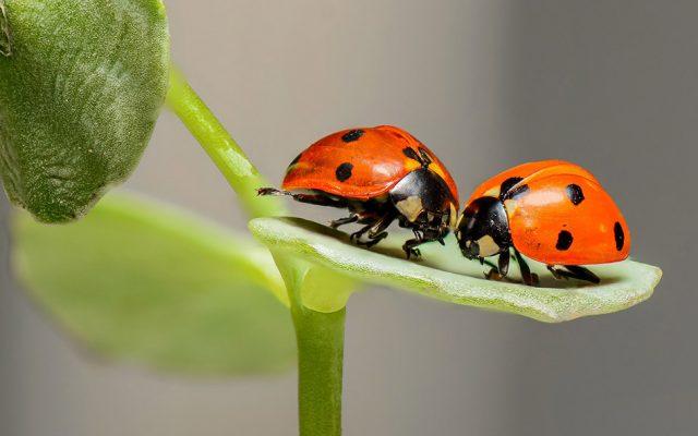 Insects Vanishing Around the Globe