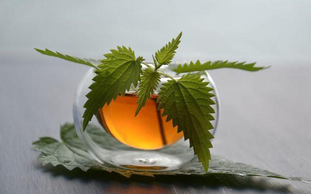 Nettle Leaf Tea Kidney Detox Solution