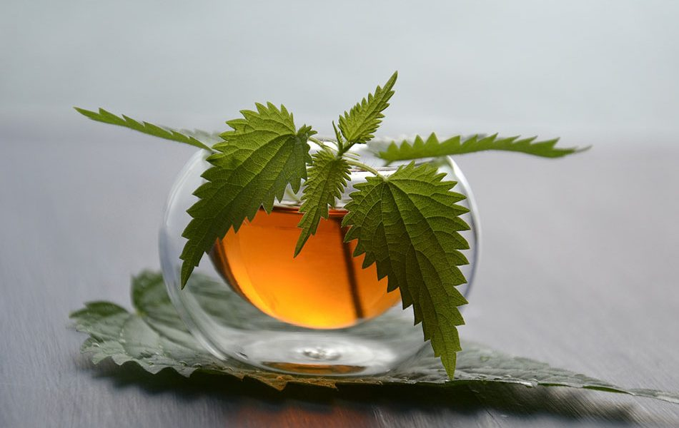 Nettle Leaf Tea Kidney Detox Solution