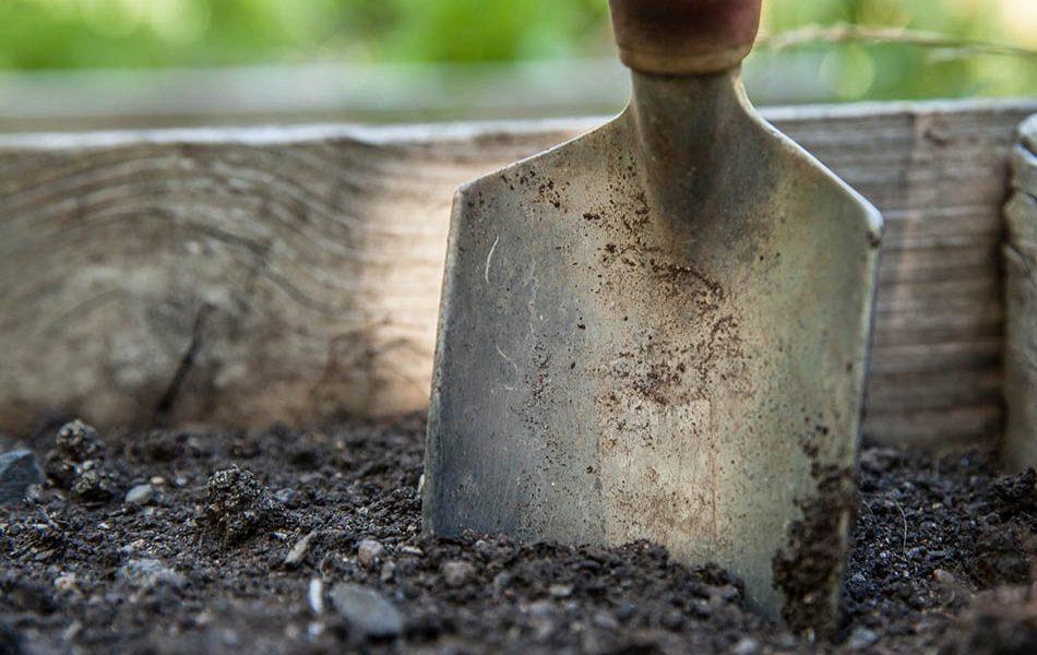 Resurrect the Soil Biochar