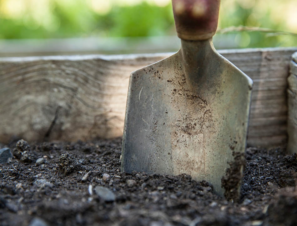 Resurrect the Soil Biochar